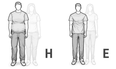 Illustration der Mischtypen H und E: eine große, kompakte und eine große, schlanke Frau