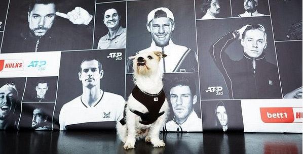 Foto: Der Hund Barnie, seines Zeichens Feelgood-Manager bei bett1, vor einem Plakat des Tennisturniers bett1HULKS.